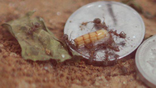 养蚂蚁能有什么乐趣